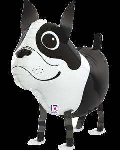 Boston Terrier Airwalker 26in/66cm