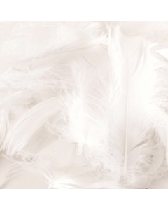 White Federn 50g